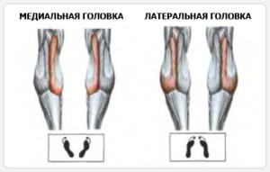 Подъем на носки стоя - положение стоп