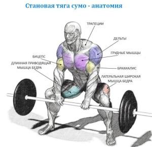 Становая тяга сумо - анатомия