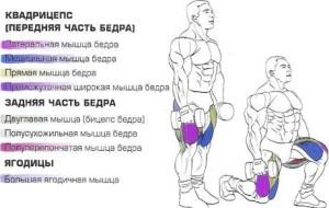 Выпады с гантелями - анатомия