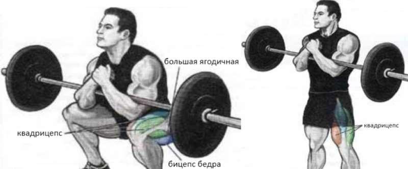 Приседы Зерхера - анатомия