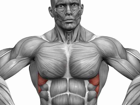 Как качать зубчатые мышцы